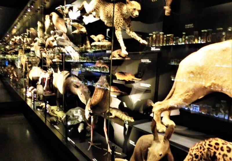 Schaumagazin mit über 500 Präperaten, Tieren, im Naturhistorischen Museum Braunschweig
