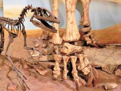 Dinosaurier im Naturhistorischen Museum Braunschweig