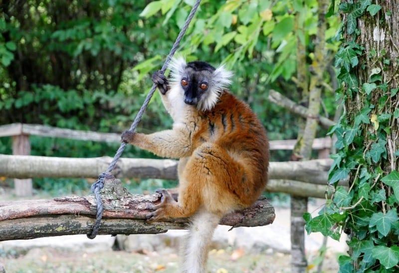 Affenpark Frankreich