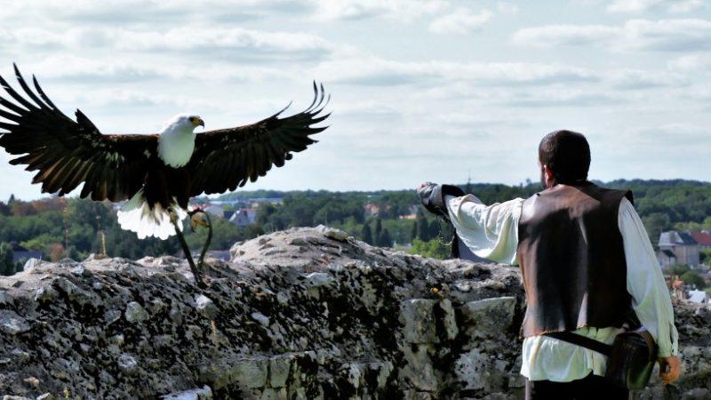 Weißkopfadler bei den Geants du Ciel