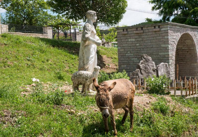 Esel im Albanien Urlaub