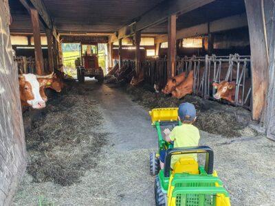 Urlaub auf dem Bauernhof zB Almerhof