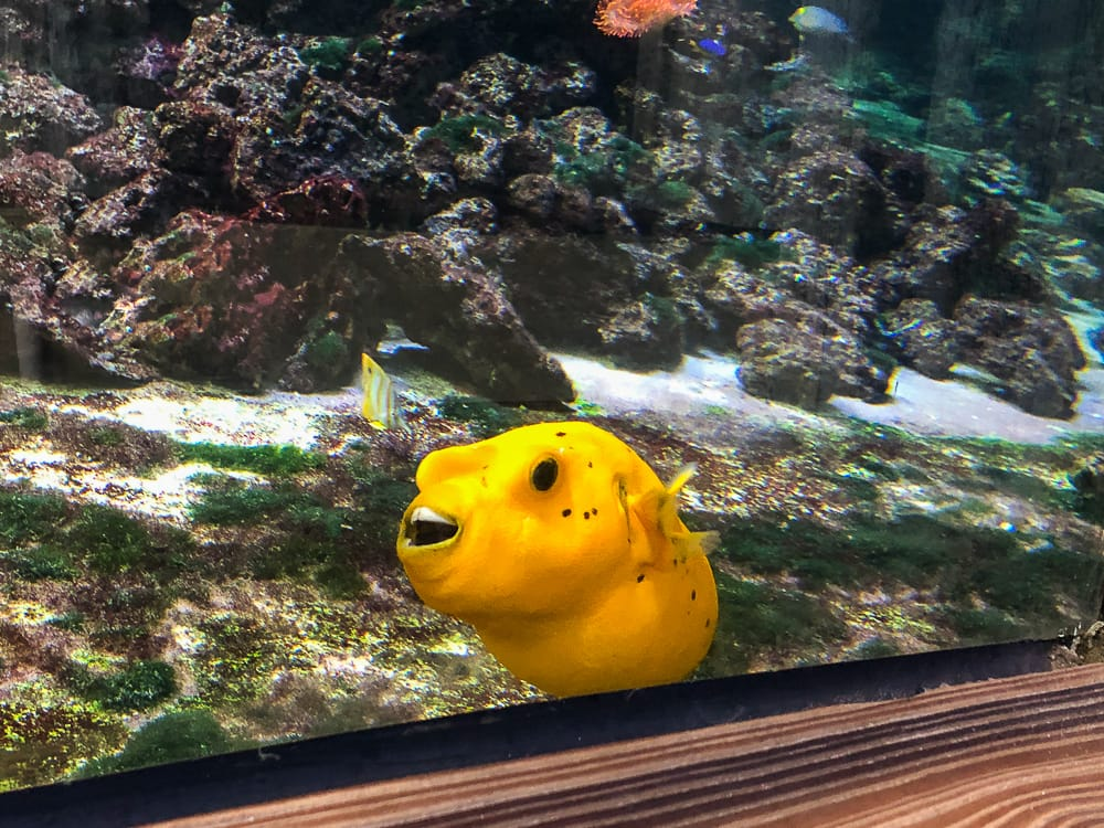 Fisch im Aquarium im Klimahaus Bremerhaven