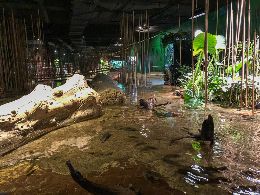 Faszinierender Regenwald in Kamerun im Klimahaus Bremerhaven