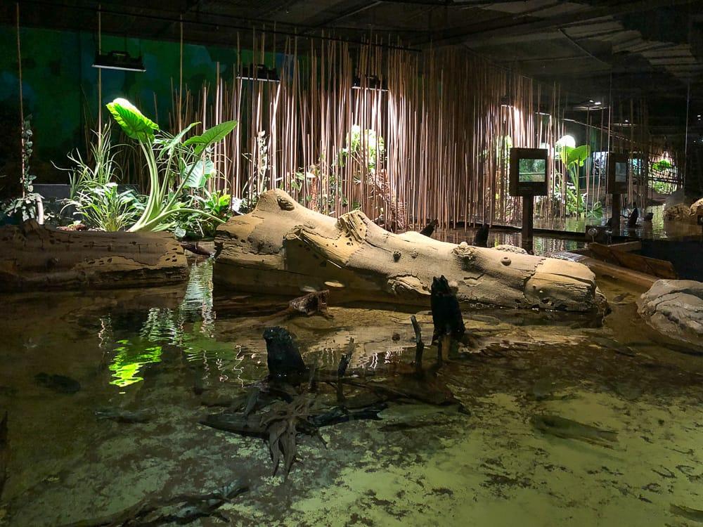 Klimazone in Kamerun im Klimahaus Bremerhaven 8 Grad Ost