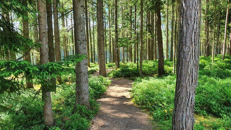 Wald Trixi Ferienpark Zittauer Gebirge