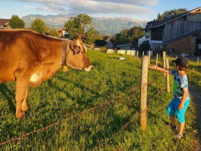 Bauernhofurlaub Sachsen
