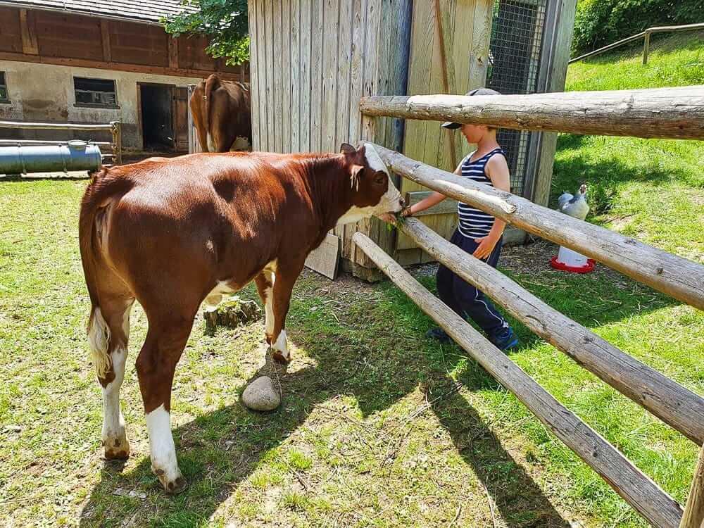 Familiencamping auf dem Bauernhof