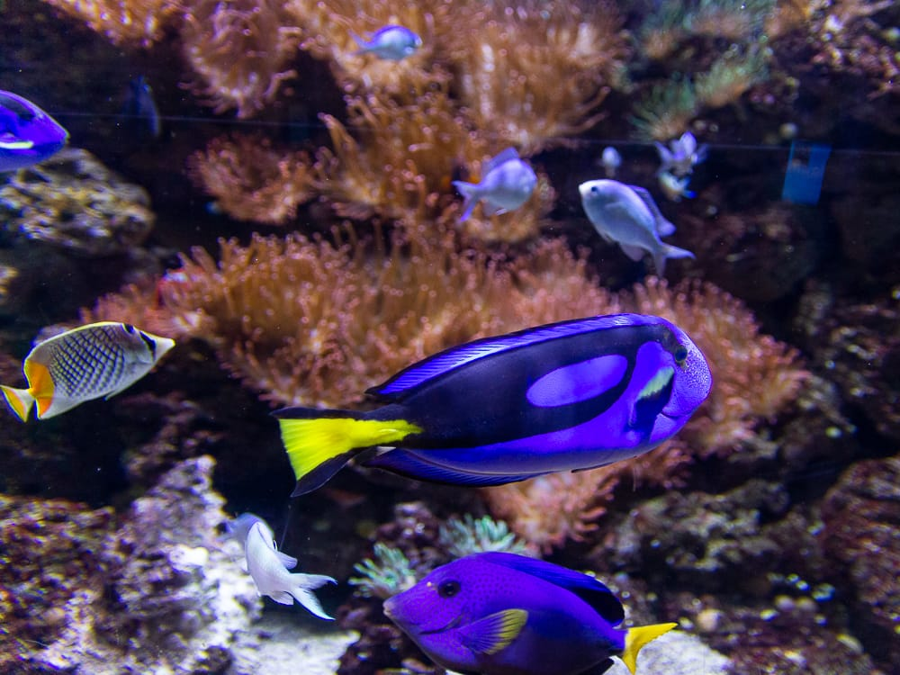 Bunte Fische im Sea Life Königswinter