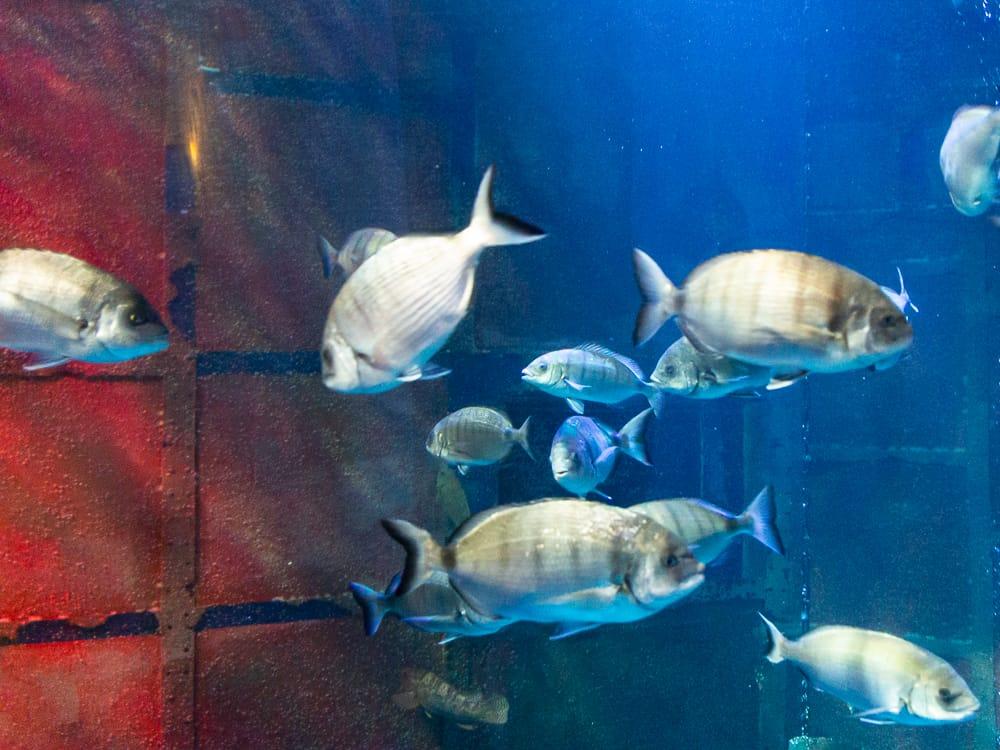 Ein Aquarium im Sea Life Königswinter