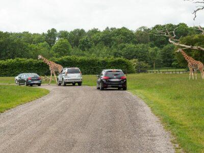 Mit dem Auto im Knuthenborg Safaripark Dänemark