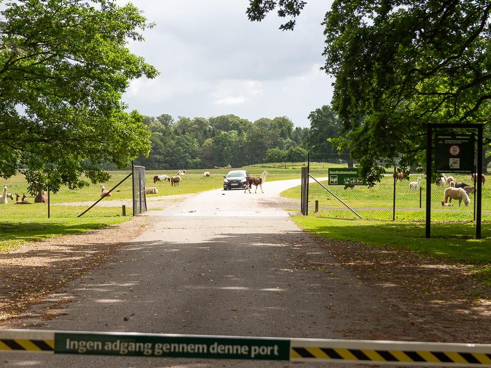 Besuch im Knuthenborg Safaripark Dänemark